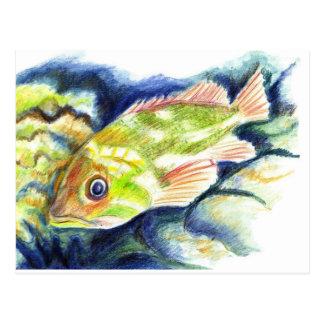 Grouper - Watercolor Pencil Drawing Postcard