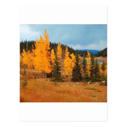 Grouping of aspen turning postcard