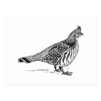 Grouse Bird Sletch Postcard