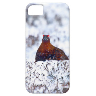 Grouse in a Blizzard iPhone 5 Case
