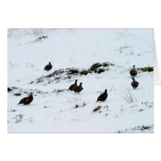 Grouse in the Snow Greeting Card