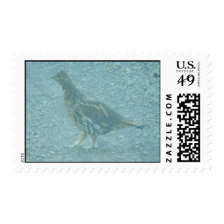 Grouse Postage Stamp