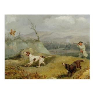 Grouse Shooting (oil on canvas) Postcard