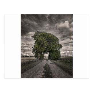 grove-of-trees-867gu postcard