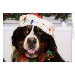 Grover - Bernese Mountain Dog Card