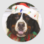Grover - Bernese Mountain Dog Stickers