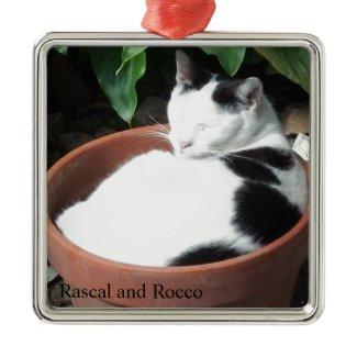 Grow a Cat Christmas Ornament