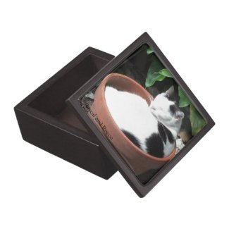 Grow a Cat Wooden Box Premium Keepsake Box