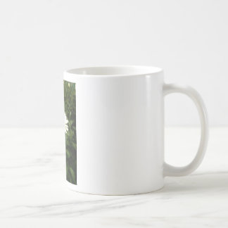 Grow, Eat and Live Green Classic White Coffee Mug