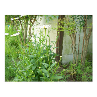 Growing Garden Post Card