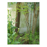 Growing Garden Postcard