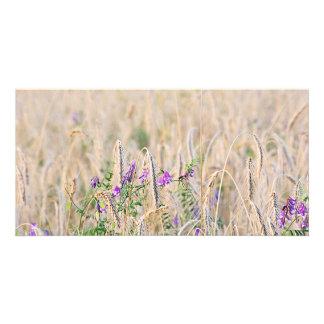 Growing Grain Photocard Card
