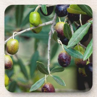 Growing Olives Beverage Coaster