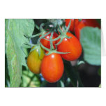 Growing Tomatoes Greeting Card