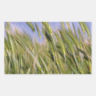 Growing Wheat Rectangular Sticker