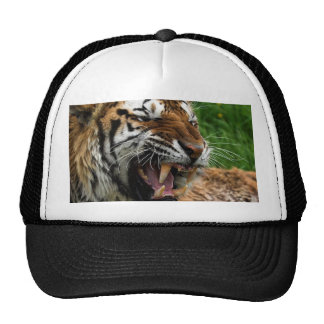 Growl of the Tiger Trucker Hat
