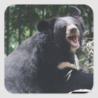 Growling Bear Stickers