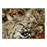 Growling Bobcat Card