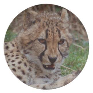 Growling Cheetah Plates