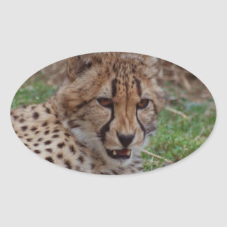 Growling Cheetah Oval Stickers