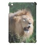 Growling Lion  iPad Case
