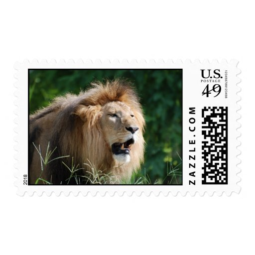 Growling Lion Postage Stamp