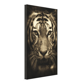 Growling Tiger Face in Sepia Tones Canvas Print