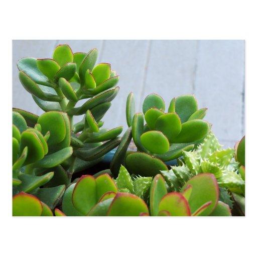 Grown in an Oxnard Ceramic Pot...California Living Postcard