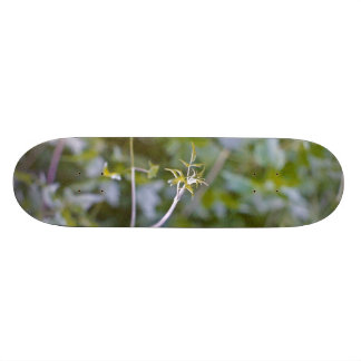 Growth and Transformation Skateboard