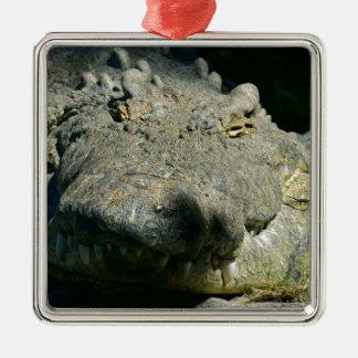 grrr gator chomp metal ornament