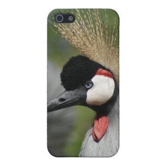 Grúa con cresta iPhone 5 protectores