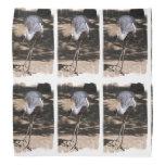 Grúa coronada africano