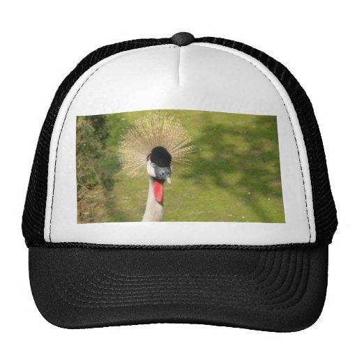 Grúa coronada gris gorras
