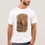 grúa del sandhill, canadensis del Grus, en el 1002 Playera