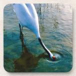 Grúa que alimenta en agua poco profunda posavaso