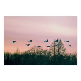 grúa Rojo-coronada en la puesta del sol Impresiones