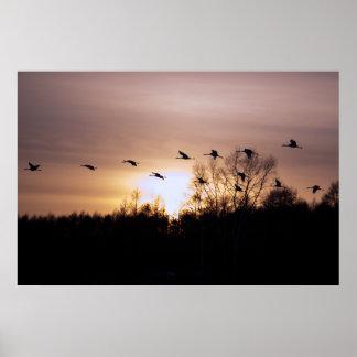Grúa Rojo-Coronada en la puesta del sol Poster