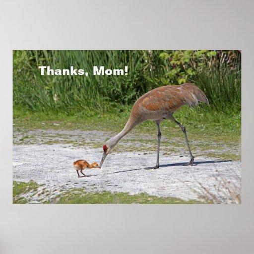 Grúas de Sandhill del pájaro de la madre y del páj Impresiones