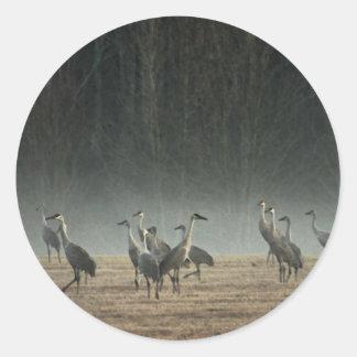 Grúas de Sandhill en la niebla de la primavera de Pegatina Redonda