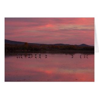 Grúas de Sandhill en la puesta del sol Bosque del Tarjeta De Felicitación
