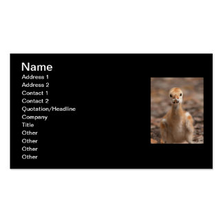 Grubs are the Best Double-Sided Standard Business Cards (Pack Of 100)