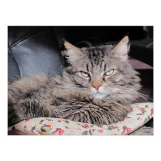Grumpy Angel's smug cat look Poster