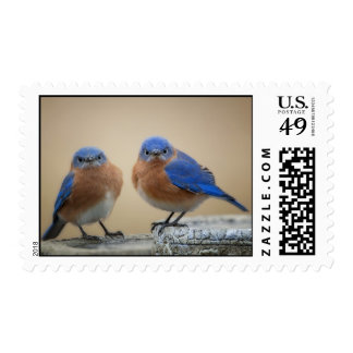 Grumpy Bluebirds Stamp