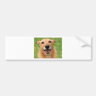 Grumpy Cat demise/ Happy Dog Products Bumper Sticker