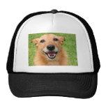 Grumpy Cat demise/ Happy Dog Products Hat