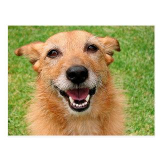 Grumpy Cat demise/ Happy Dog Products Postcard