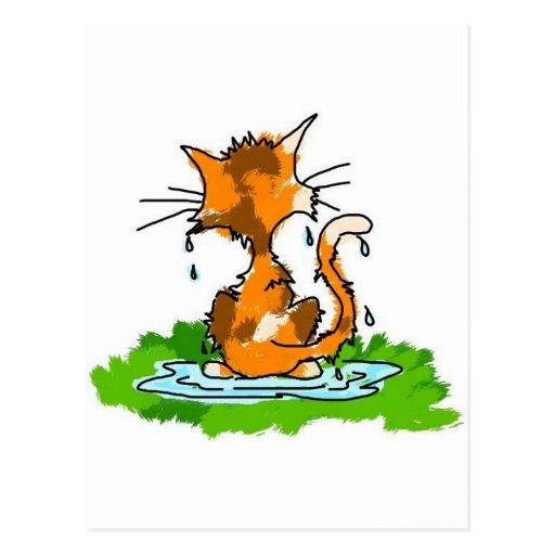 Grumpy Cat Post Card