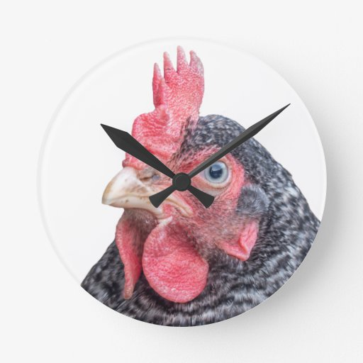 Grumpy Chicken Funny Frowning Hen Photo Round Wall Clocks