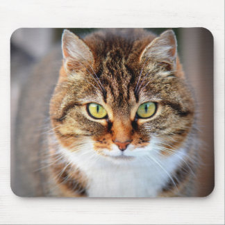 Grumpy Cute Brown White Cats Kittens Kitty Pets Mouse Pad
