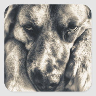 Grumpy Dog stickers